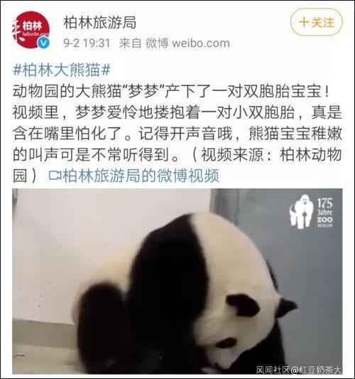 官方回应熊猫宝宝取名香港说了什么?给熊猫宝宝取名香港事件始末