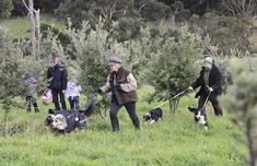 钻石级食材黑松露产地搬家 澳大利亚成全球之最年产15吨