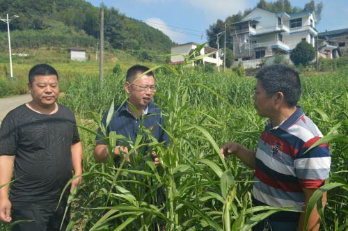 始终把脱贫攻坚的责任扛在肩上——浦城县官路乡花园村的党支部第一书记黄凌鸿