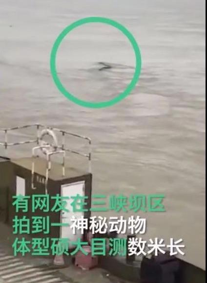 三峡水怪被打捞:三峡神秘动物是什么真相揭晓