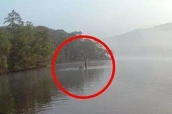 尼斯湖水怪曝光(图)!尼斯湖拍到巨型鳗鱼视频 与水怪DNA比对相同