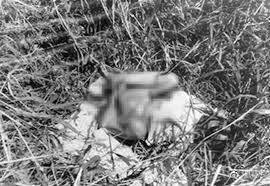 33年悬案重大突破 杀人回忆凶手原型被抓狱中照片曝光 案情细节流出(6)