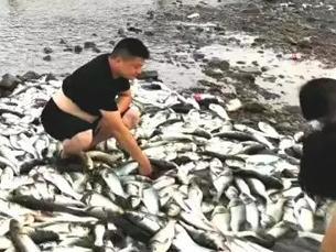 """奇观!浙江惊现""""漫天飞鱼"""",站着就有鱼跳到你手上!当地政府发出提醒"""