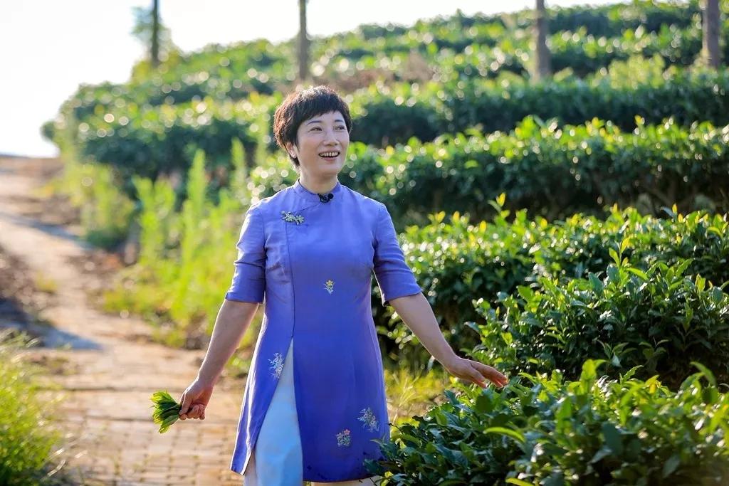 松溪县委书记黄美萍出尸体镜代言,向全球推介松溪绿茶!