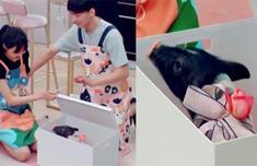 七夕节张恒送郑爽一傲视天途头猪