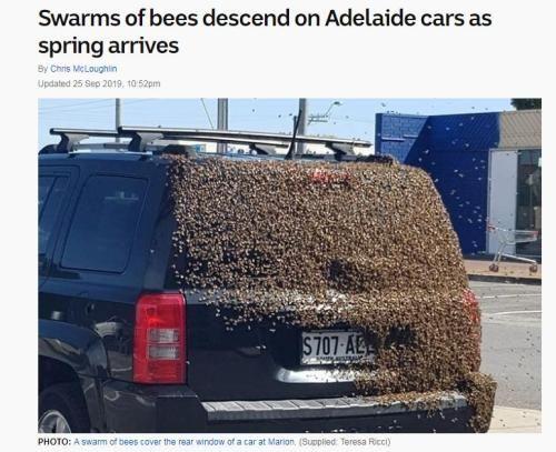 图片来源:澳大利亚广播公司网站截图。供图者:Thresa Ricci