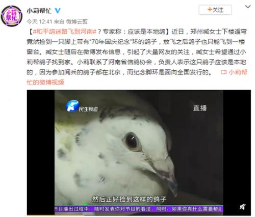 和平鸽迷路飞到河南详细新闻介绍?和平鸽迷路为什么会飞到河南