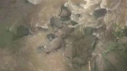 小象跌落瀑布死亡事件始末 5頭大象為了救它也跌落全部死亡