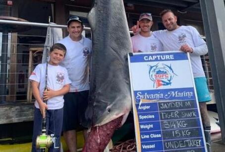 男童捕628斤巨鲨什么情况 男童是如何捕628斤巨鲨