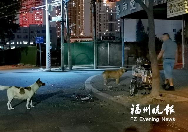 """誰養犬不管犬?福州五城區整治""""狗患"""""""