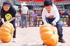 福建永春:庆丰收 赏美景 话旅游