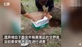 警方对活埋婴儿事件立案调查最新消息 老人活埋婴儿原因曝光