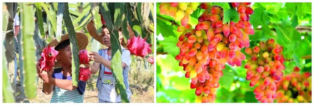 三明这处田园小村落里藏着撩拨你的心弦的悠悠山谷,周末自驾游赏秋去!