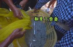 平潭海鮮名菜丨黃金丁香魚抱蛋了解一下!快來get它的做法