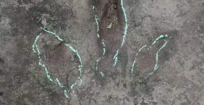 四川发现巨大恐龙足迹怎么回事?四川发现巨大恐龙足迹图片曝光