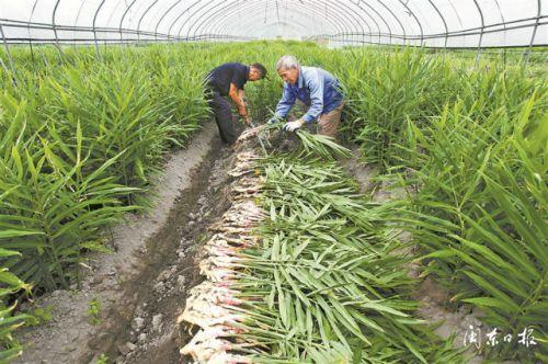 前三季度宁德市农村经济继续保持稳中向好的健康发展态势