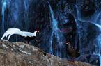 飛瀑鷴影:白鷴在文筆山下一瀑布旁覓食嬉戲
