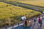 福建漳州:節氣里的花田 藏著最美樂章