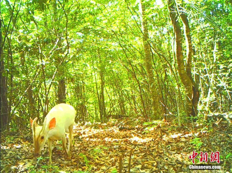 神农架现罕见动物怎么回事神农架现罕见动物是什么照片曝光