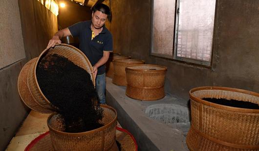 福建武夷山:茶叶合作社打开致富门路