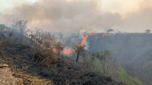 台湾发生杂草火警燃烧面积约2公顷 现已扑灭