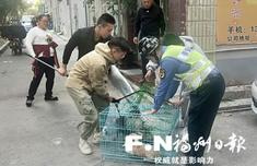 福州晉安城管全面整治轄區流浪犬