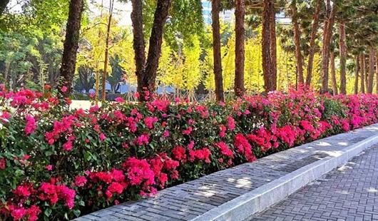 福州鼓樓區溫泉公園,美呆了!