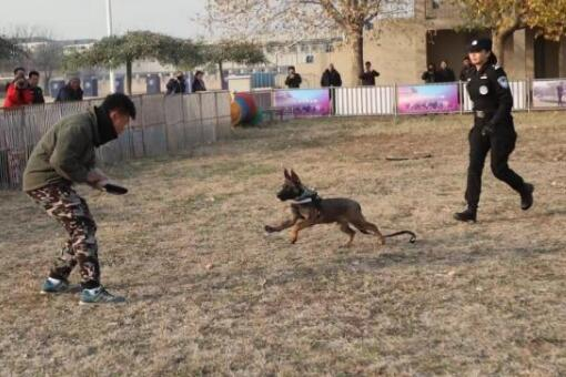 北京首批警用克隆犬入警什么情况 克隆犬长什么样照片曝光
