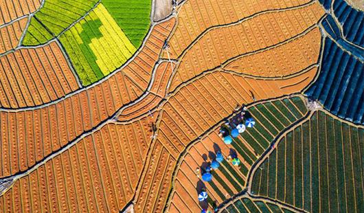 福建福安:特色产业 振兴乡村