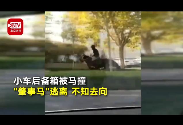 男子骑马追尾轿车
