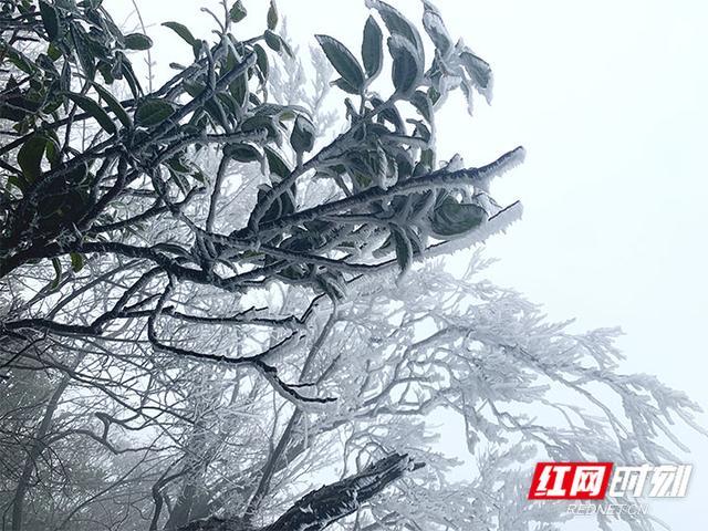 张家界天门山雾凇今冬首秀 只看一眼就心动