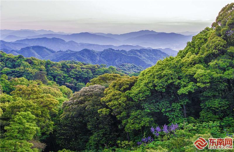 """福建在全國率先開展重點生態區位商品林贖買 激活""""綠色不動產"""""""