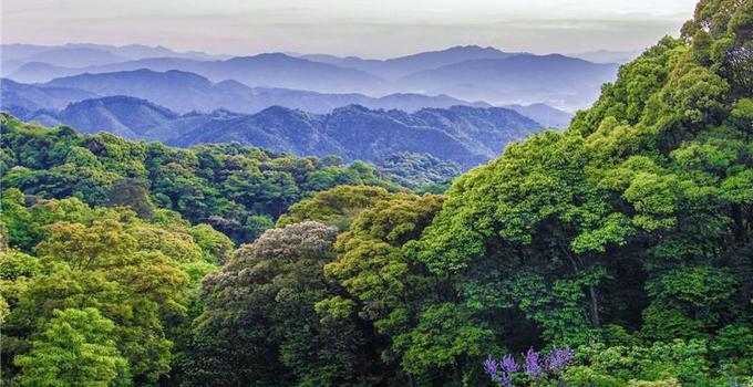 """福建在全国率先开展重点生态区位商品林赎买 激活""""绿色不动产"""""""