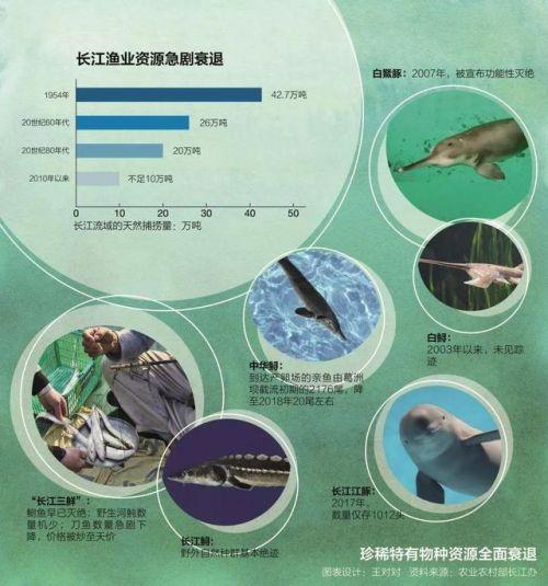 长江无鱼之困详细新闻报道?长江为什么要禁渔十年背后原因揭秘