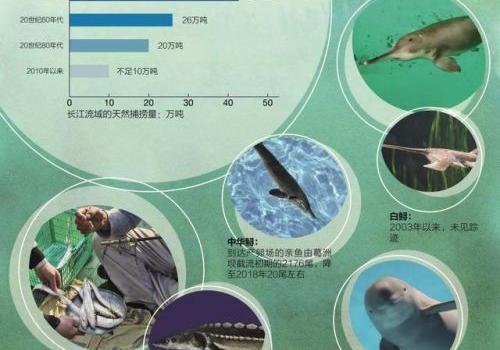 长江无鱼之困是怎么回事?长江为什么要禁渔十年背后原因揭秘
