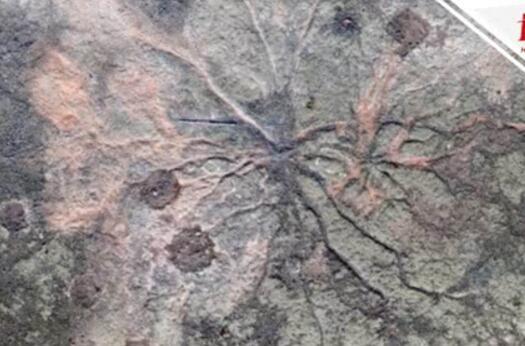 美国发现3.85亿年前森林化石 1.4亿多年之后世界上才开始出现恐龙