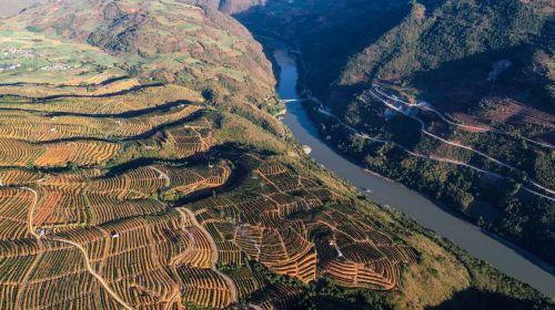 △怒江峡谷边的万亩云冠橙基地,经过五年建设一点点成型。