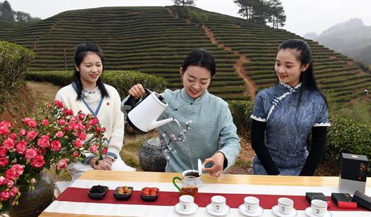 福建武夷山:擺茶席 迎新年