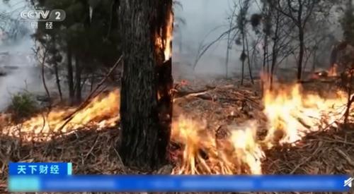 澳山火烟雾至南美怎么回事 森林大火还将持续几周或几个月