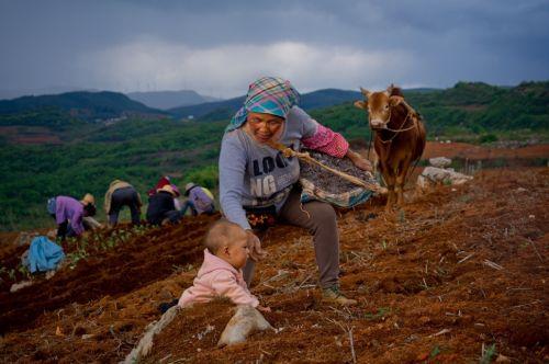"""商務部發布興農報告:""""拼農貨""""直連城鄉助力農產品上行"""