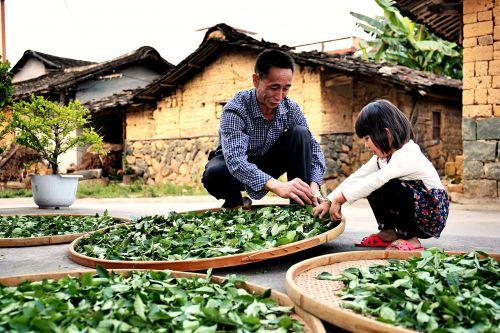 """福建安溪铁观音""""新品牌联盟""""成立 拼多多助力茶产业数字化转型"""