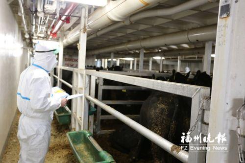 海关关员对进境种牛进行检查。