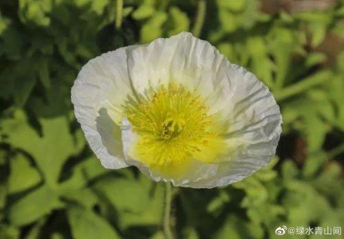 6.5万㎡花朵齐盛开!福州花海公园像童话世界