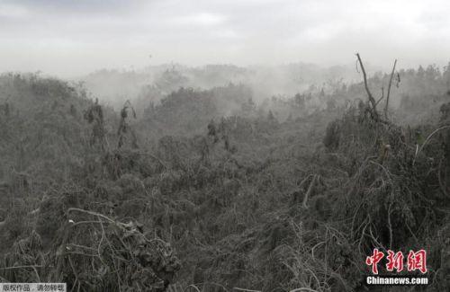 菲律宾塔阿尔火山爆发危机或持续数周 大批动物濒死