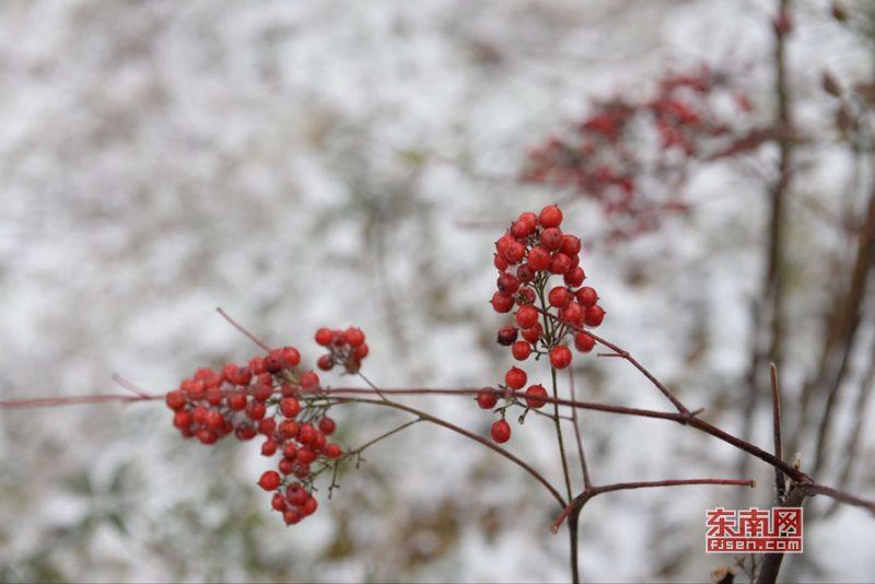 李宏图 雪景