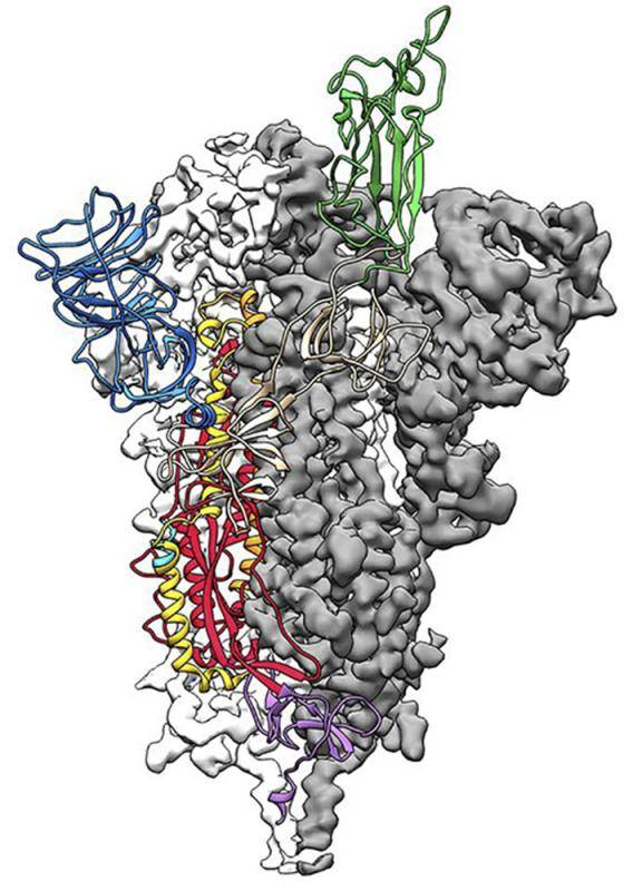 首个新冠病毒原子图出炉 或18个月能研制出疫苗