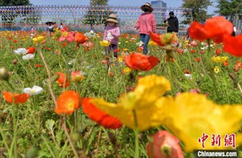 图为戴着口罩的市民和儿童在福州花海公园游玩赏花。 张斌 摄