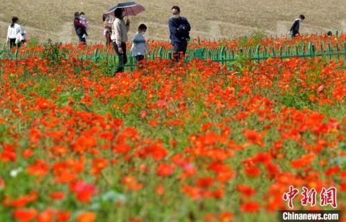 图为戴着口罩的民众在福州花海公园游玩赏花,享受明媚春光。 张斌 摄