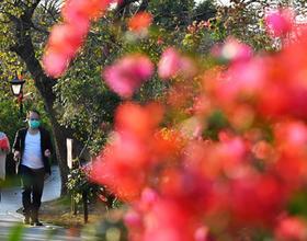 福州春意浓 市民到公园感受春天