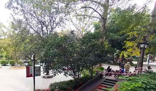 澳门皇冠游戏视讯公园将限流!西湖实时在园所以只能提升到中级散神2000人!